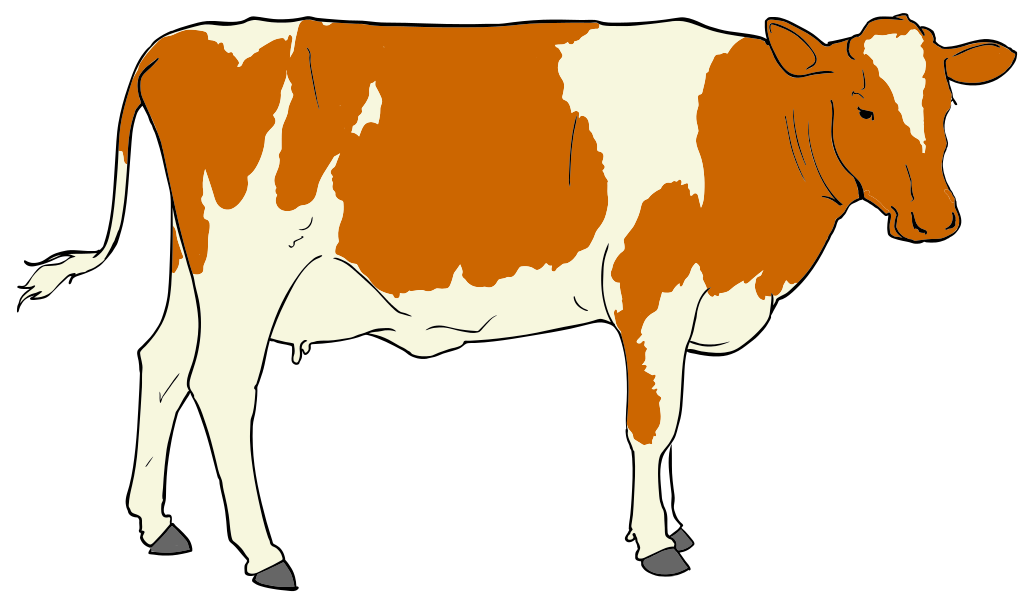 Cows with accents cow. Decoration clipart file
