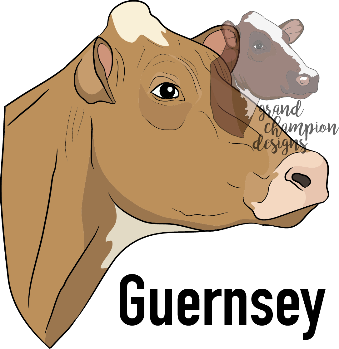 Cows clipart nose. Guernsey dairy cow window