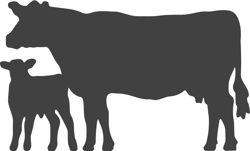 Angus cow silhouette at. Head clipart hereford bull