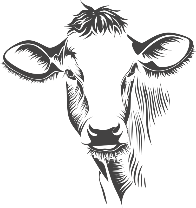 Clipart cow outline. Free black and white