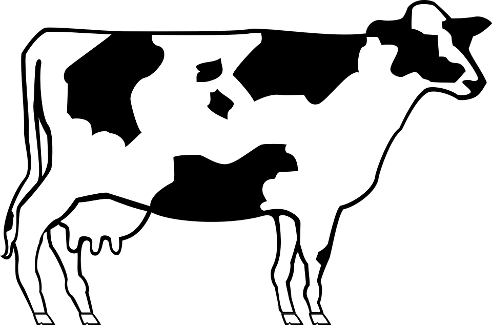 Png cow black and. Farmer clipart livestock farming