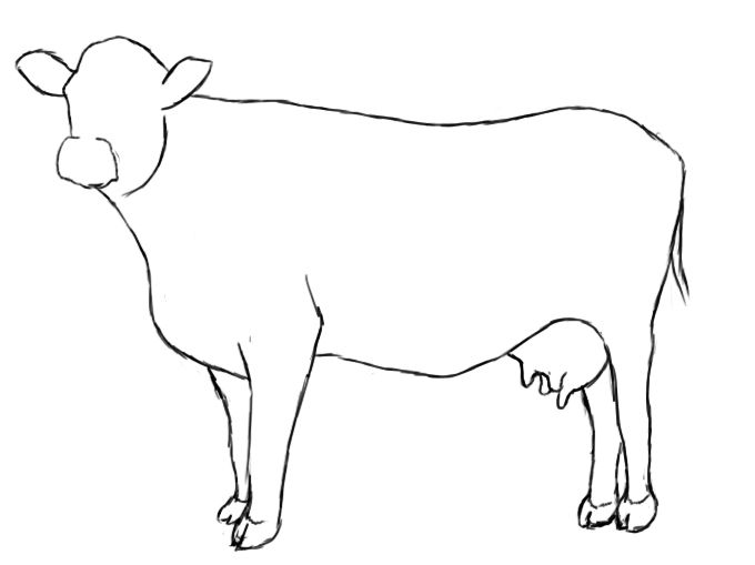 Clipart cow sketch. How to draw a