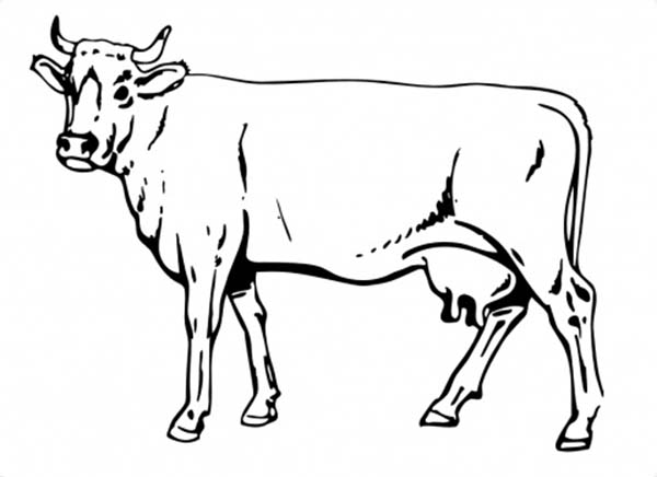 Clipart cow sketch. Free drawing download clip
