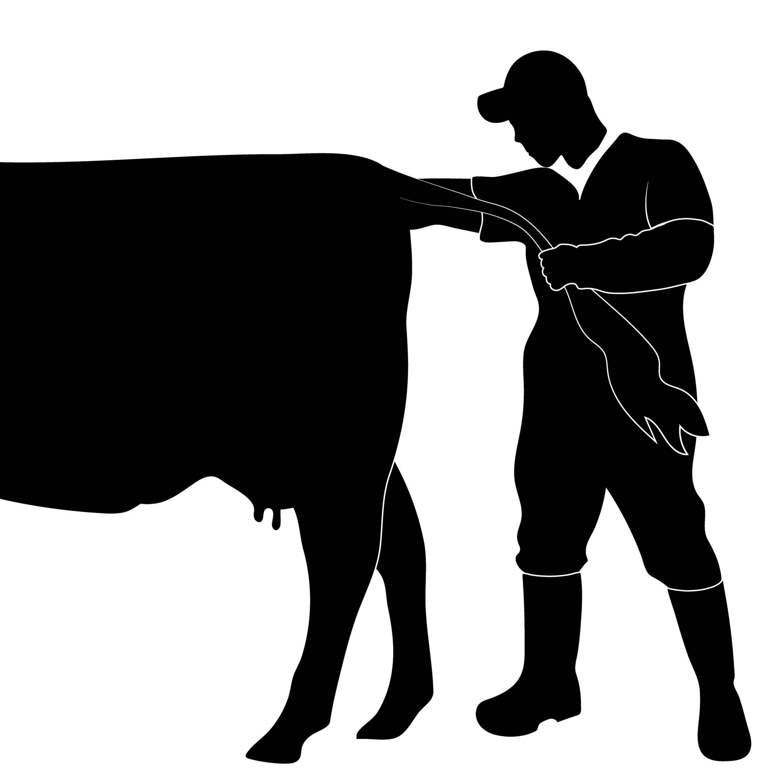 Cow clipart vet. Cody creelman a podcast