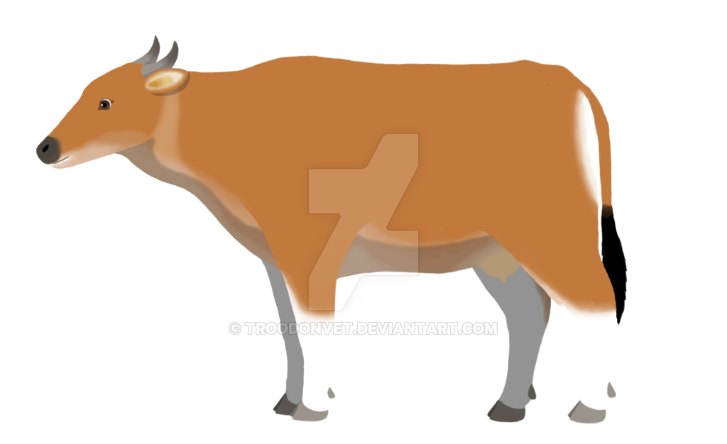 Bos javanicus female by. Clipart cow vet