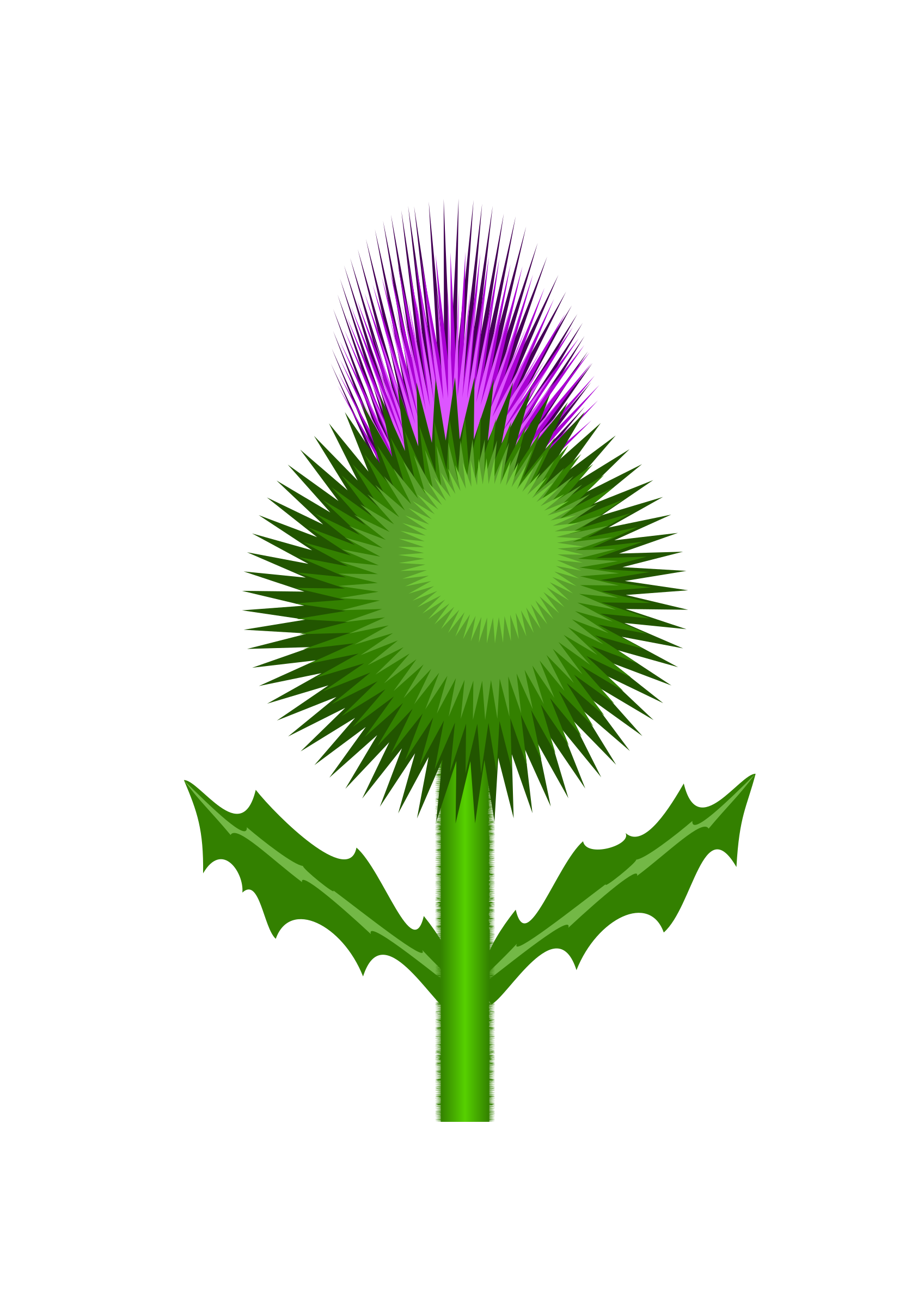 Witch clipart foot. Scottish thistle by kevie