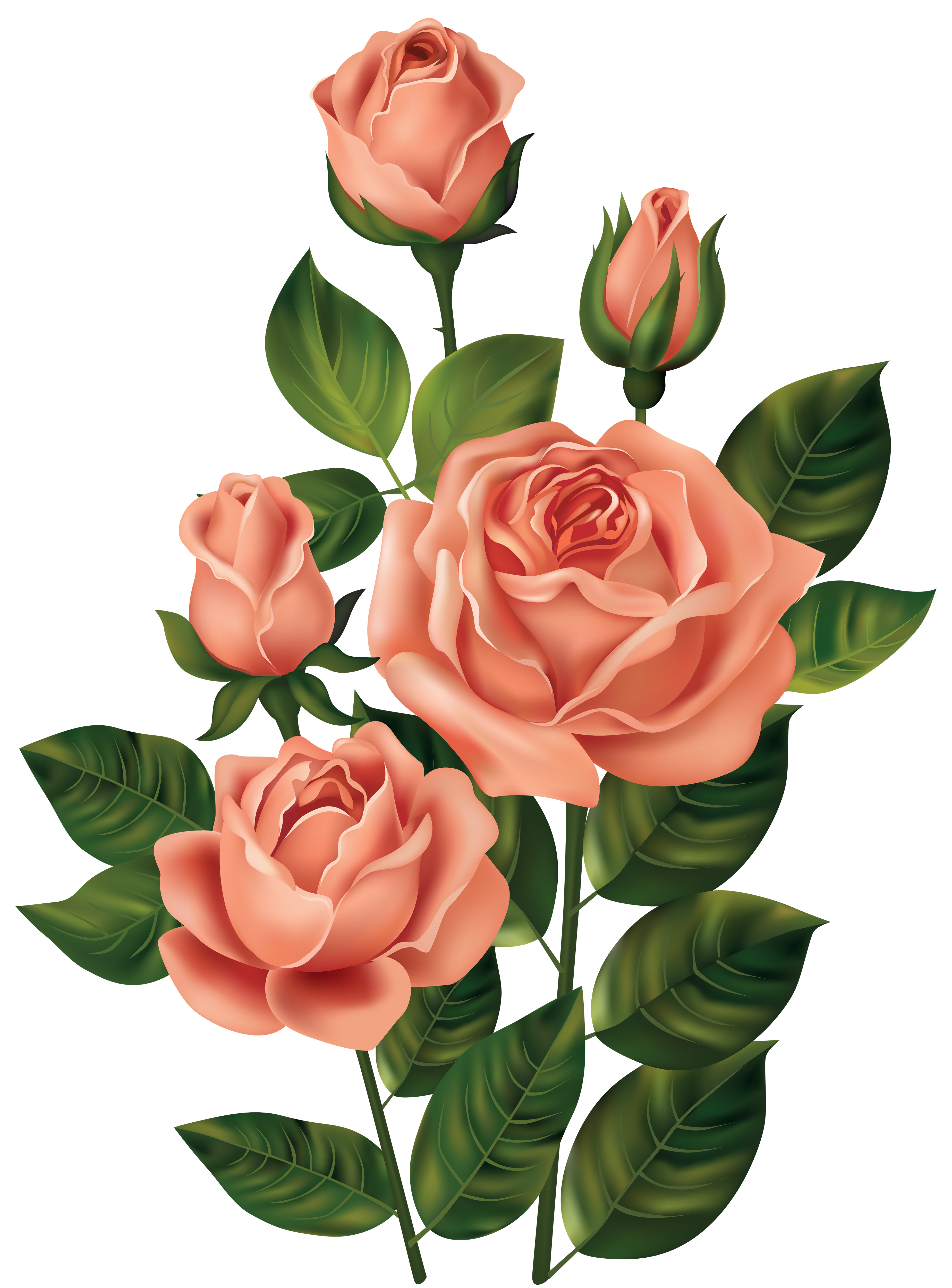 Roses png image pinterest. Clipart rose top