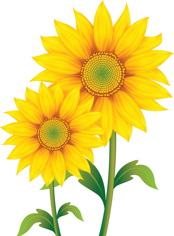 Field clipart sunflowers. Fleurs flores flowers bloemen