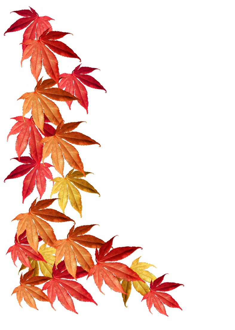 fall leaves border png