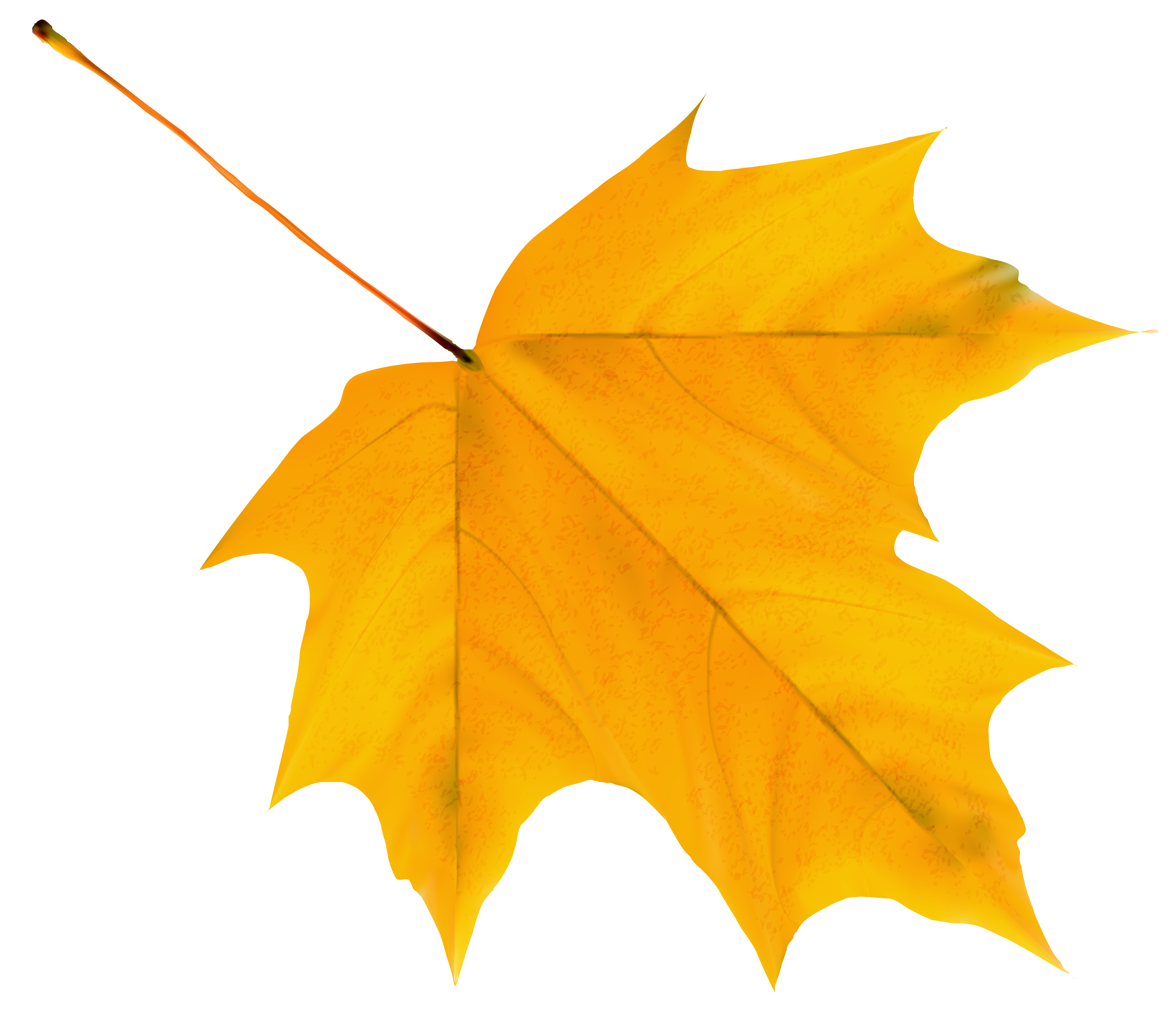 Yellow autumn leaf png. Clipart fall deciduous tree