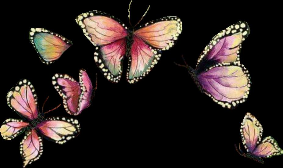 Crown clipart butterfly. Butterflywings mariposa sticker report