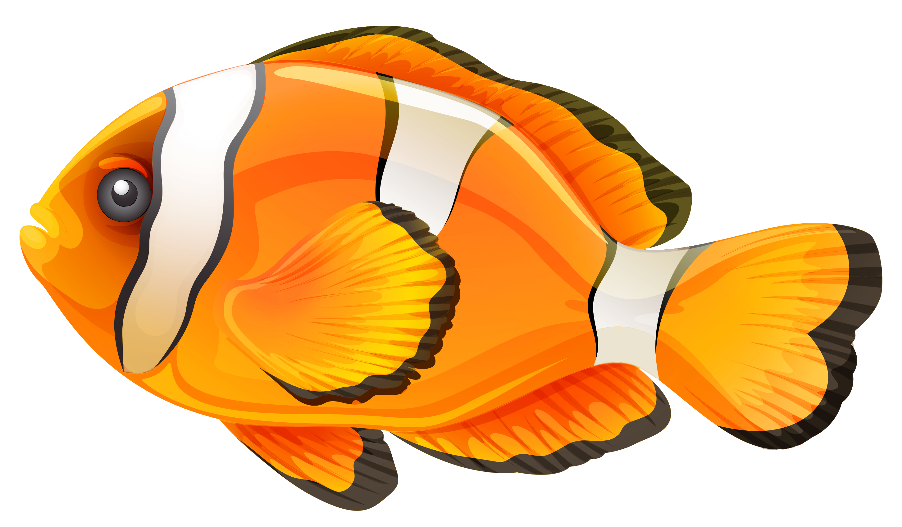 collection of images. Name clipart fish