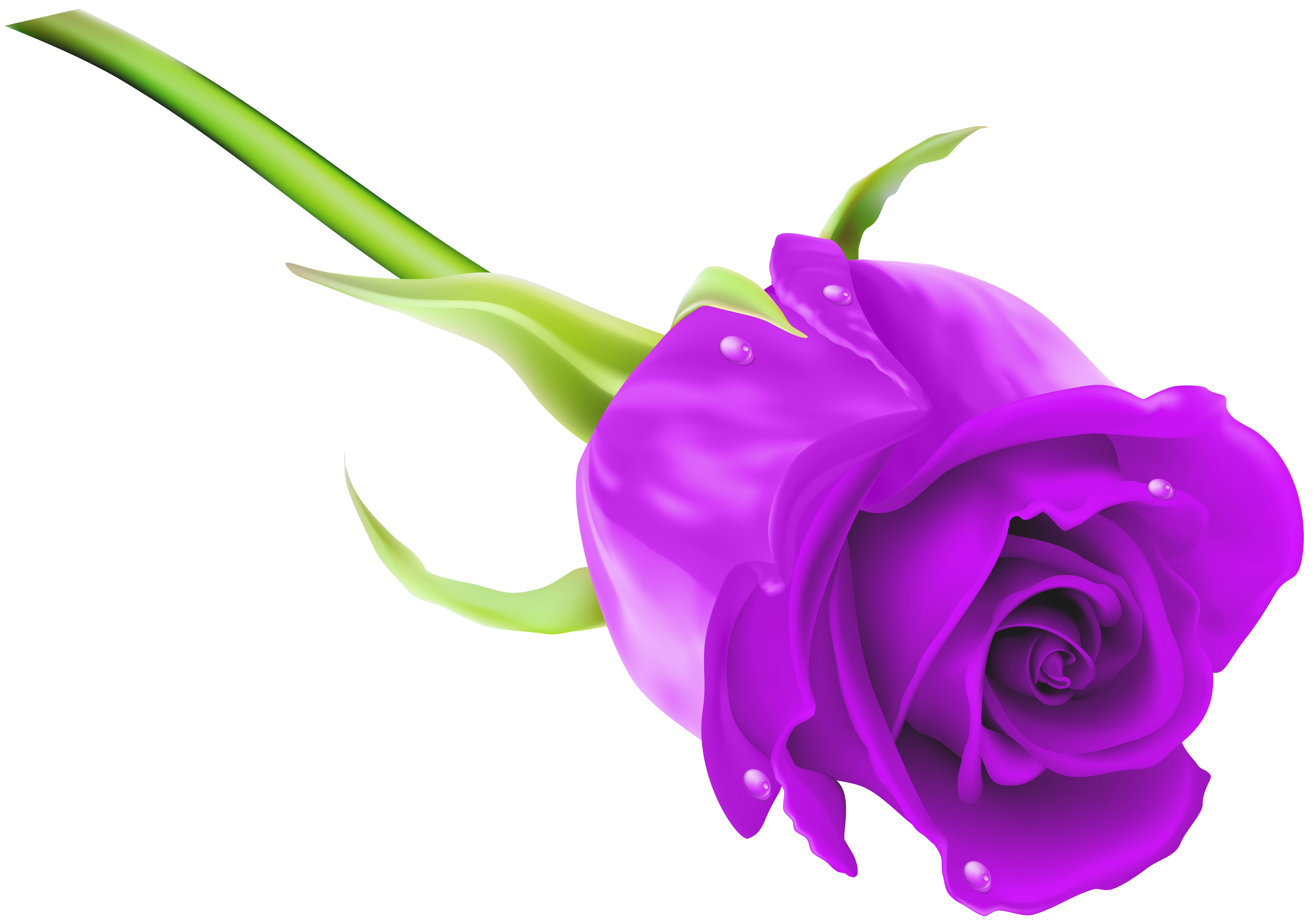 Rose png clip art. Clipart roses purple