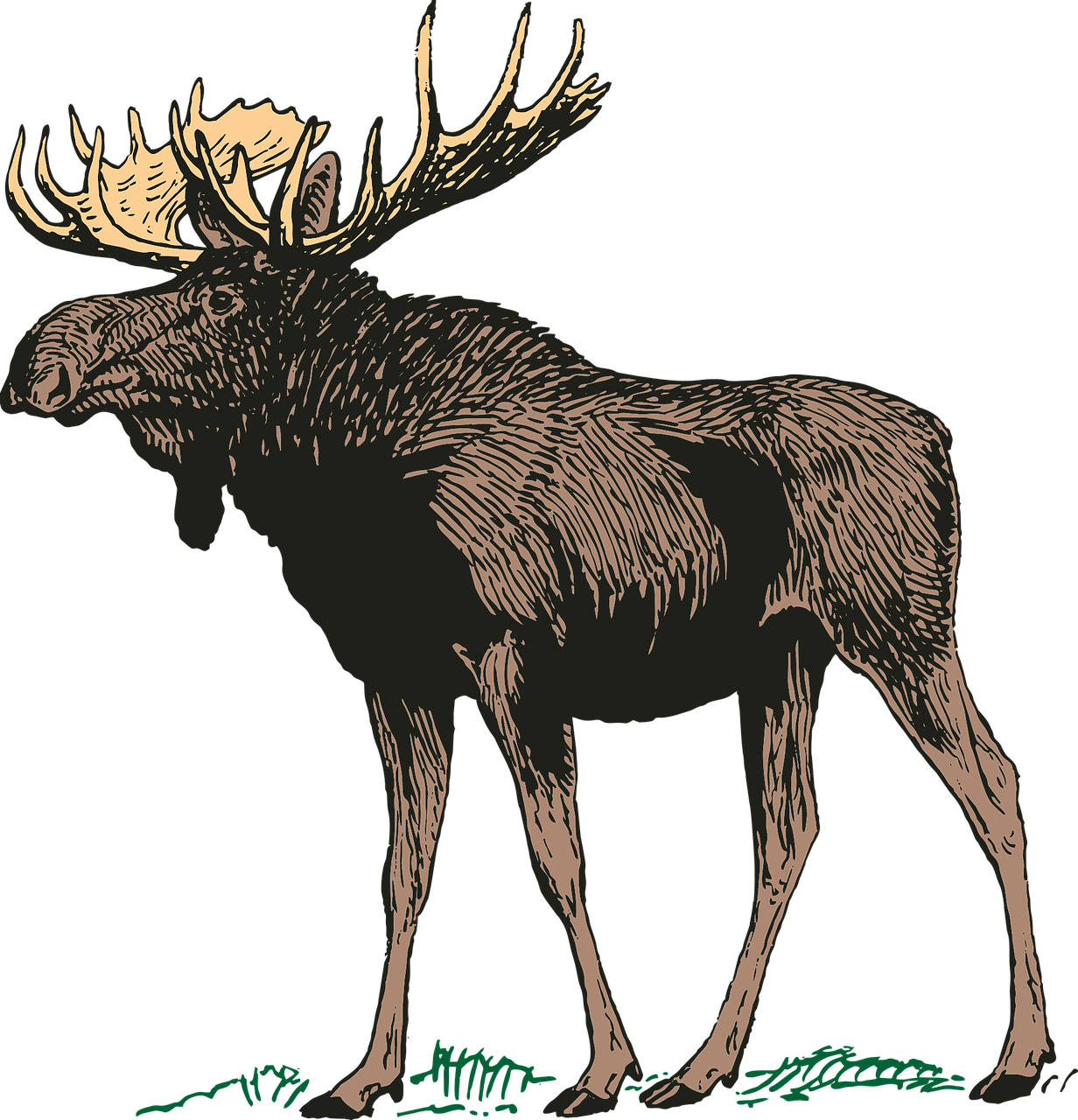 Moose clipart moose hunting. Cooking with meat whatsupyukon