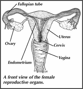 Reproductive system from answers. Clipart definition