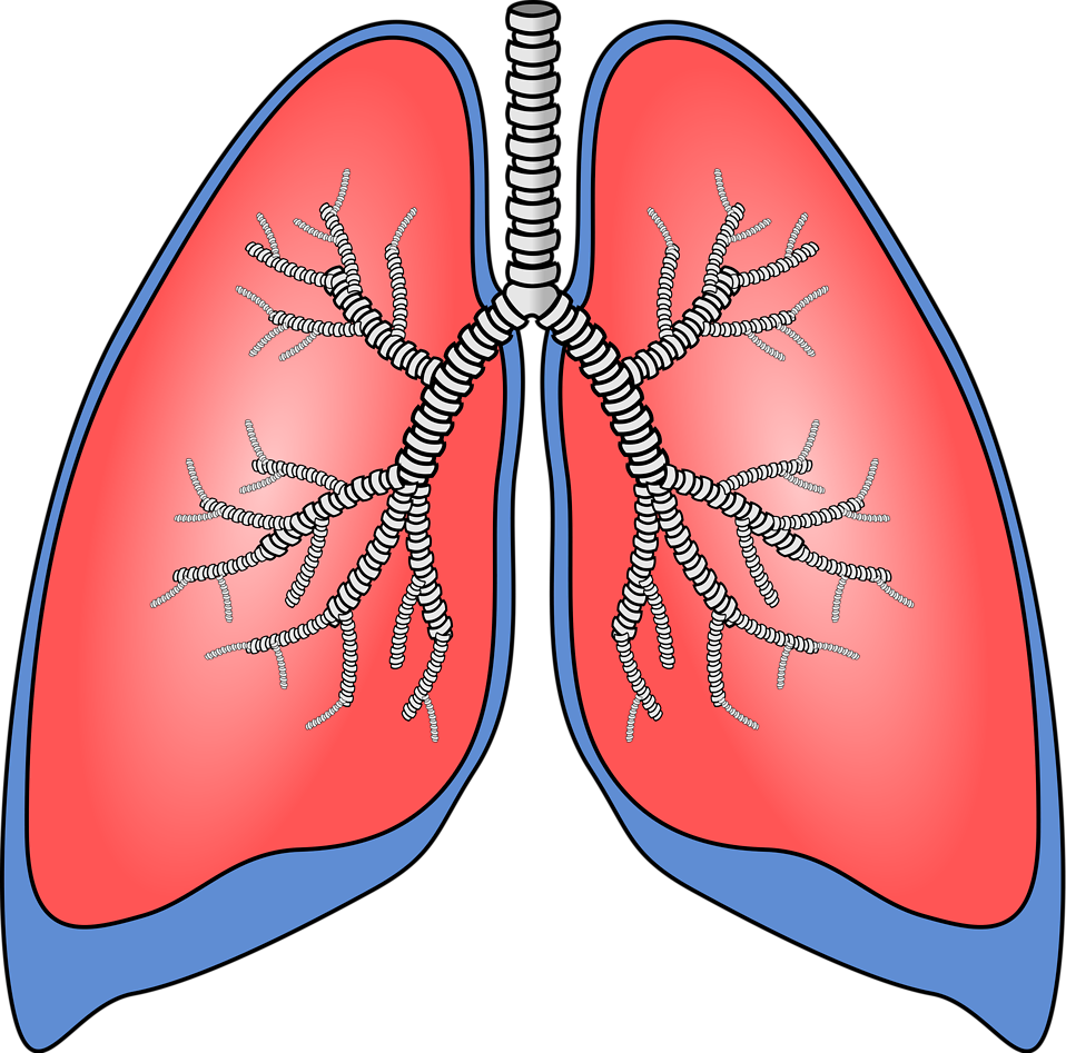 Cold clipart respiratory infection. Find out which of