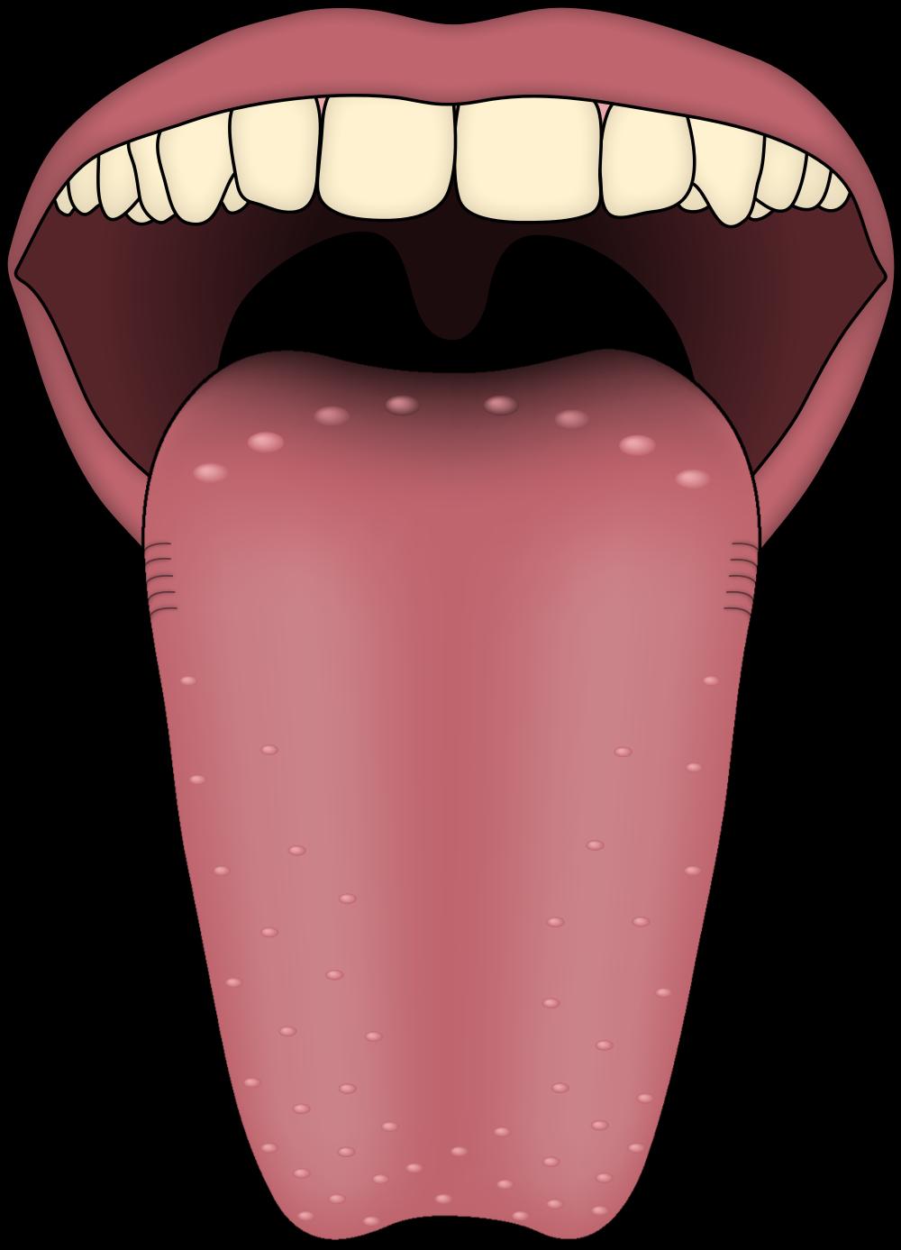 Taste clipart sense organ tongue. What causes a sore