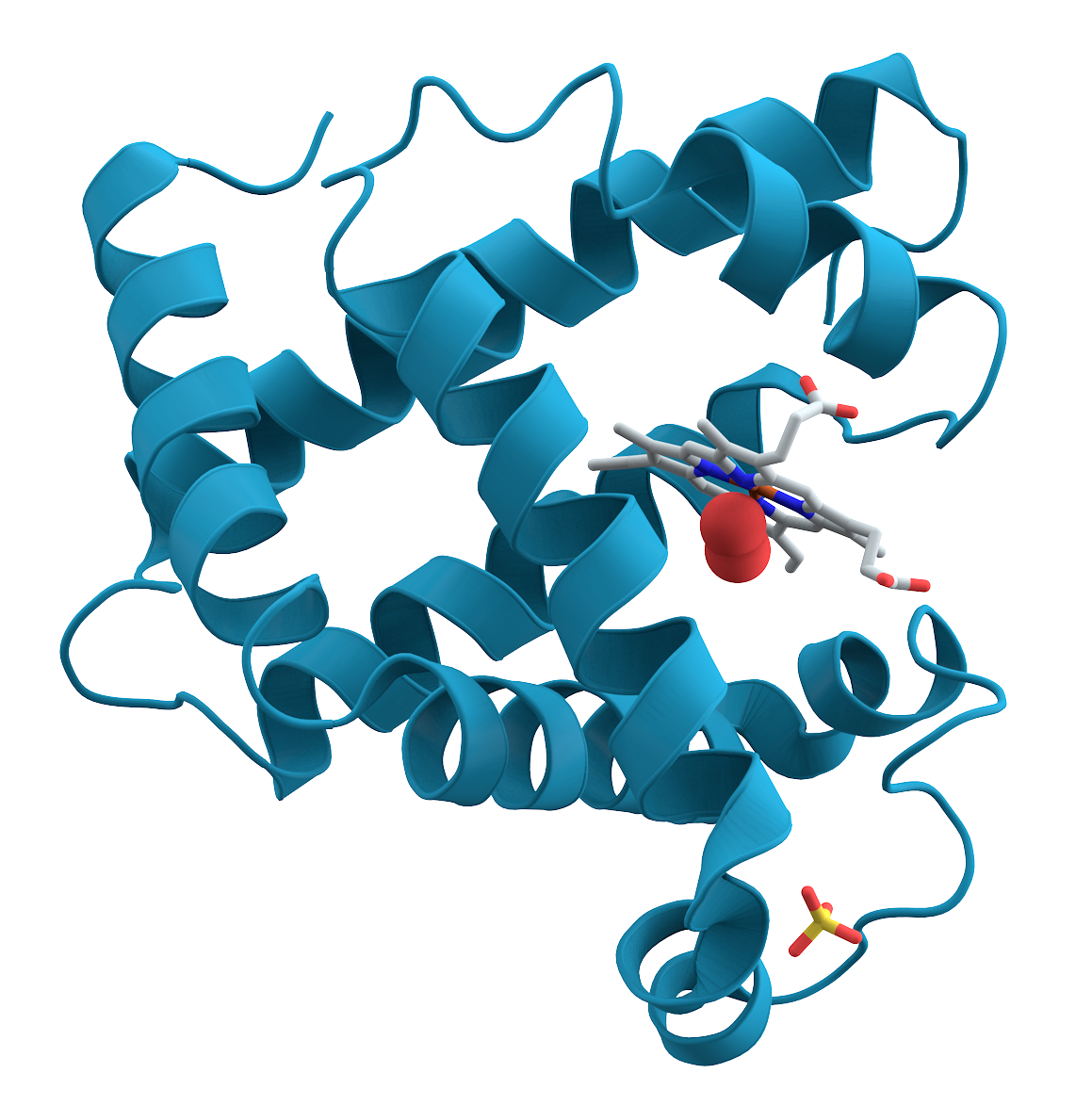 Protein wikipedia . Clipart definition oxford dictionary