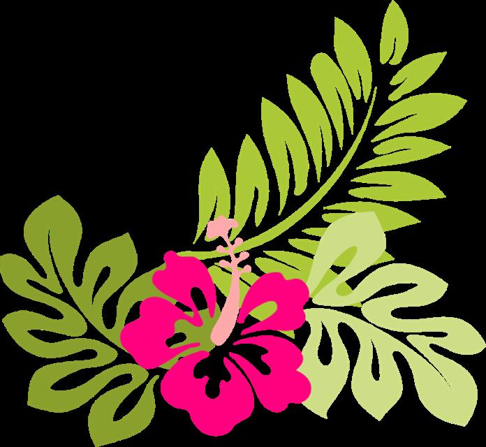 Image tropical flower clip. Hawaiian clipart hawiian