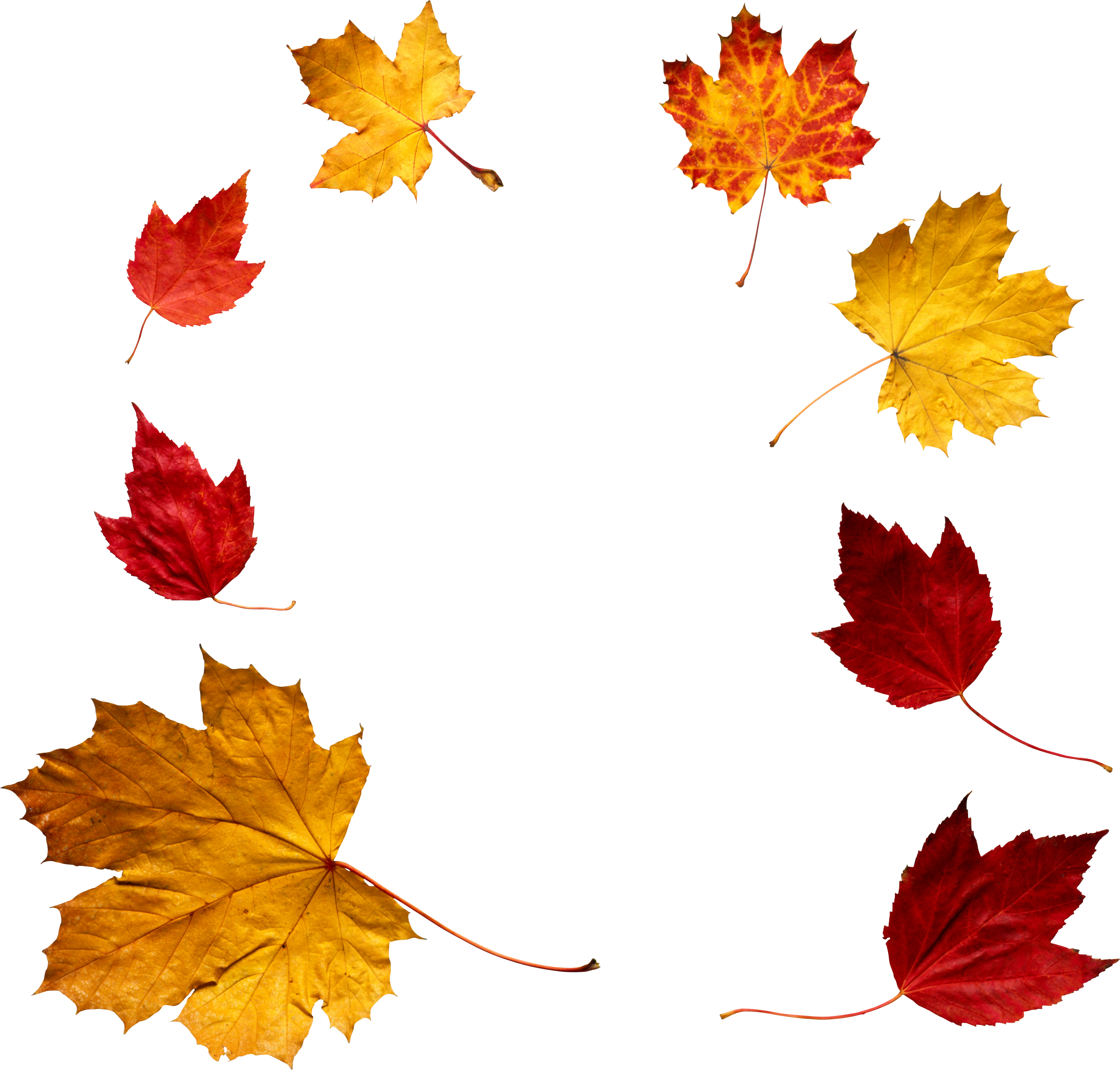 Clothes clipart autumn. Leaves thirteen isolated stock