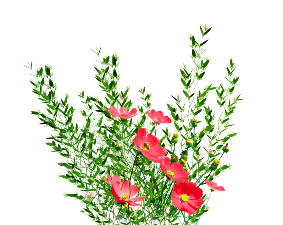 Flowers by kmygraphic on. Flower garden png