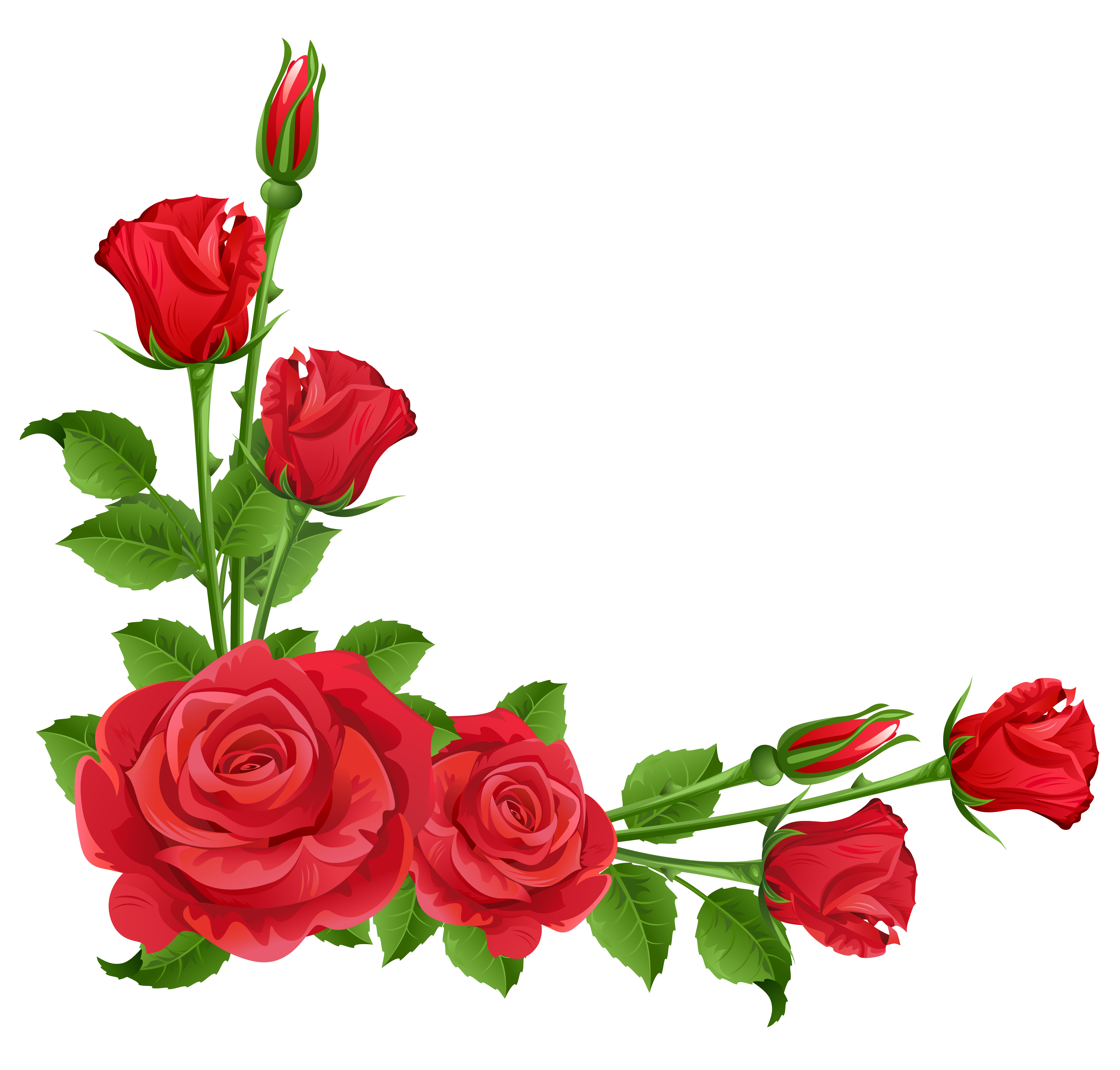 Red roses transparent png. Boarder clipart rose