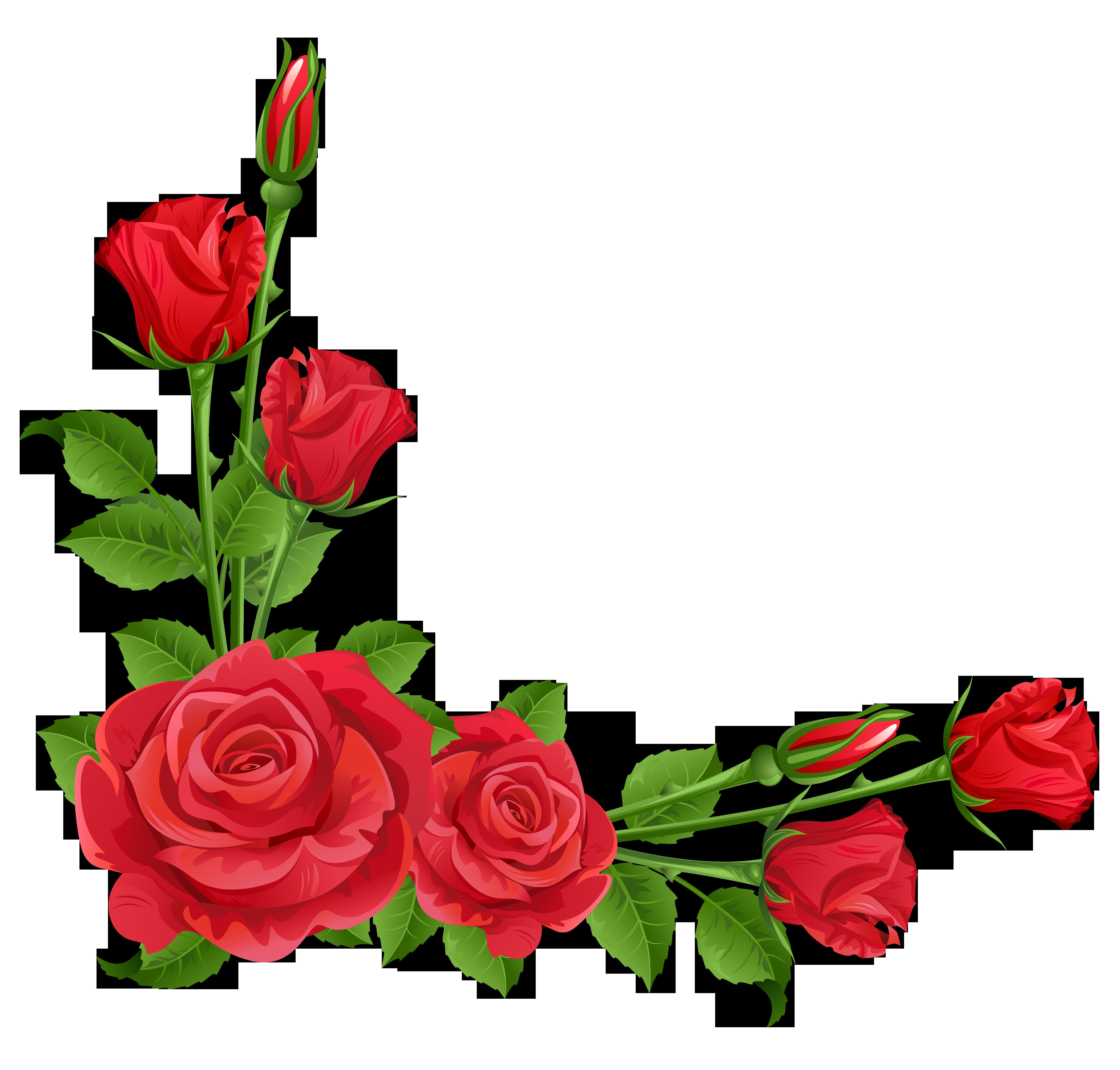 Red roses transparent png. Clipart design rose