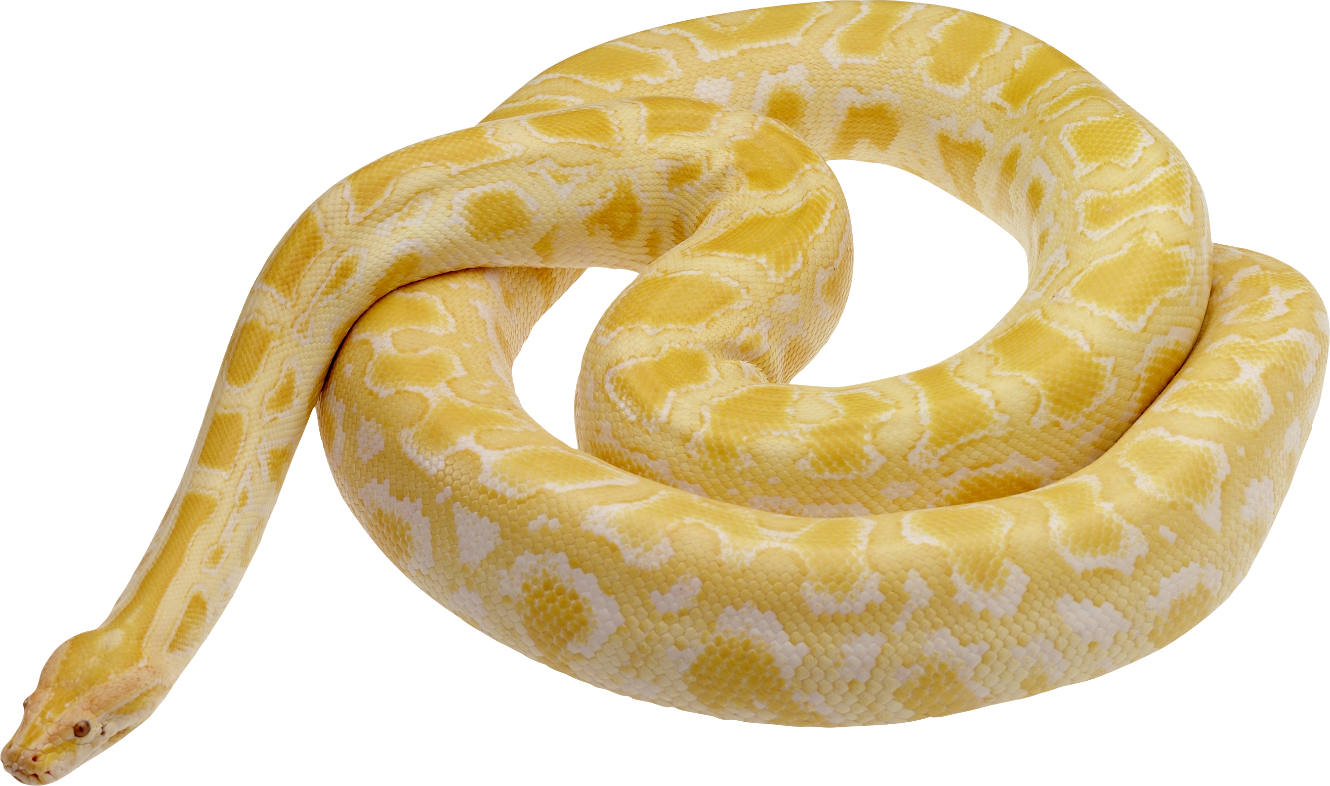Snake clipart tiger snake. Photo transparentpng