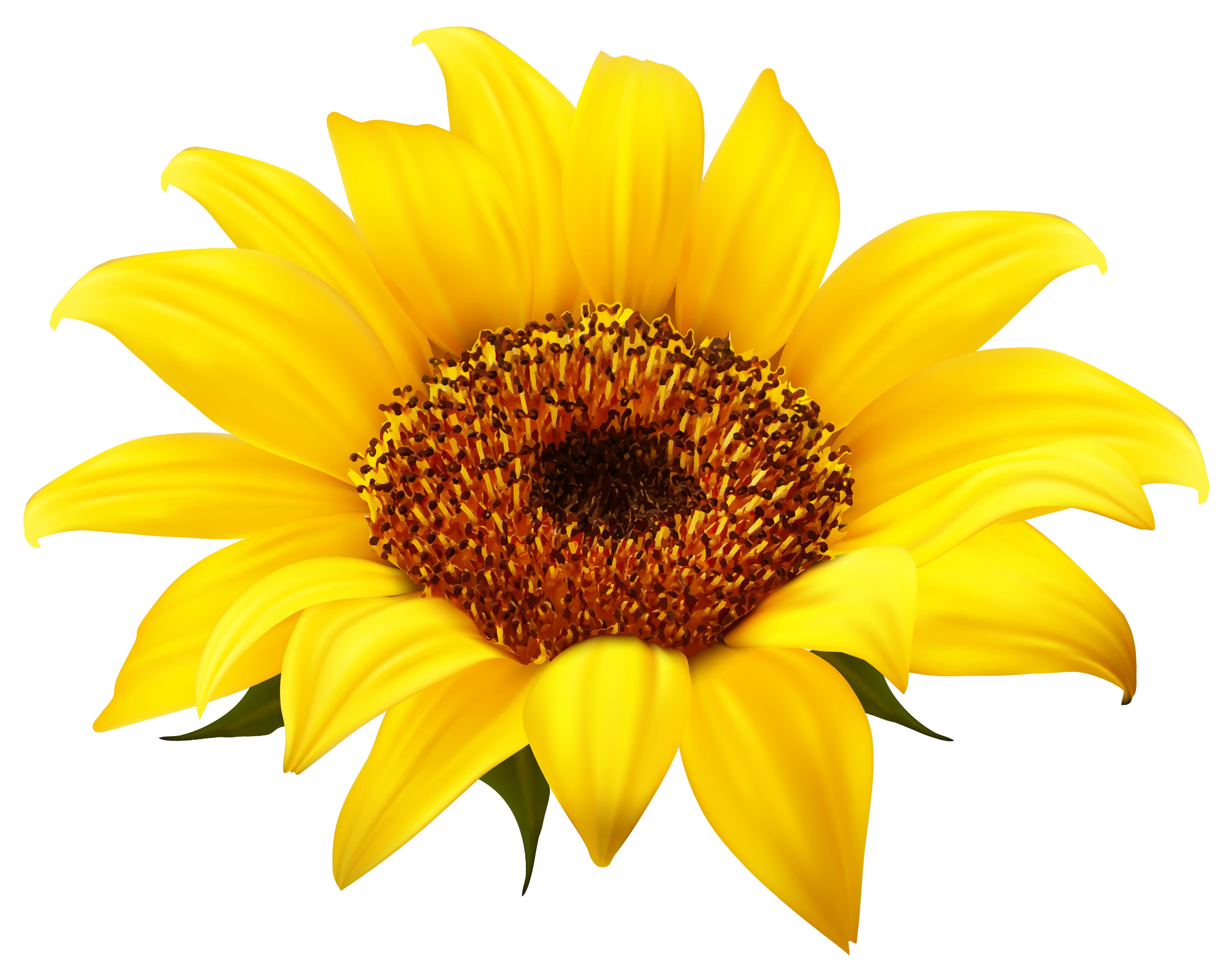 Sun flower png. Sunflower clipart image gallery