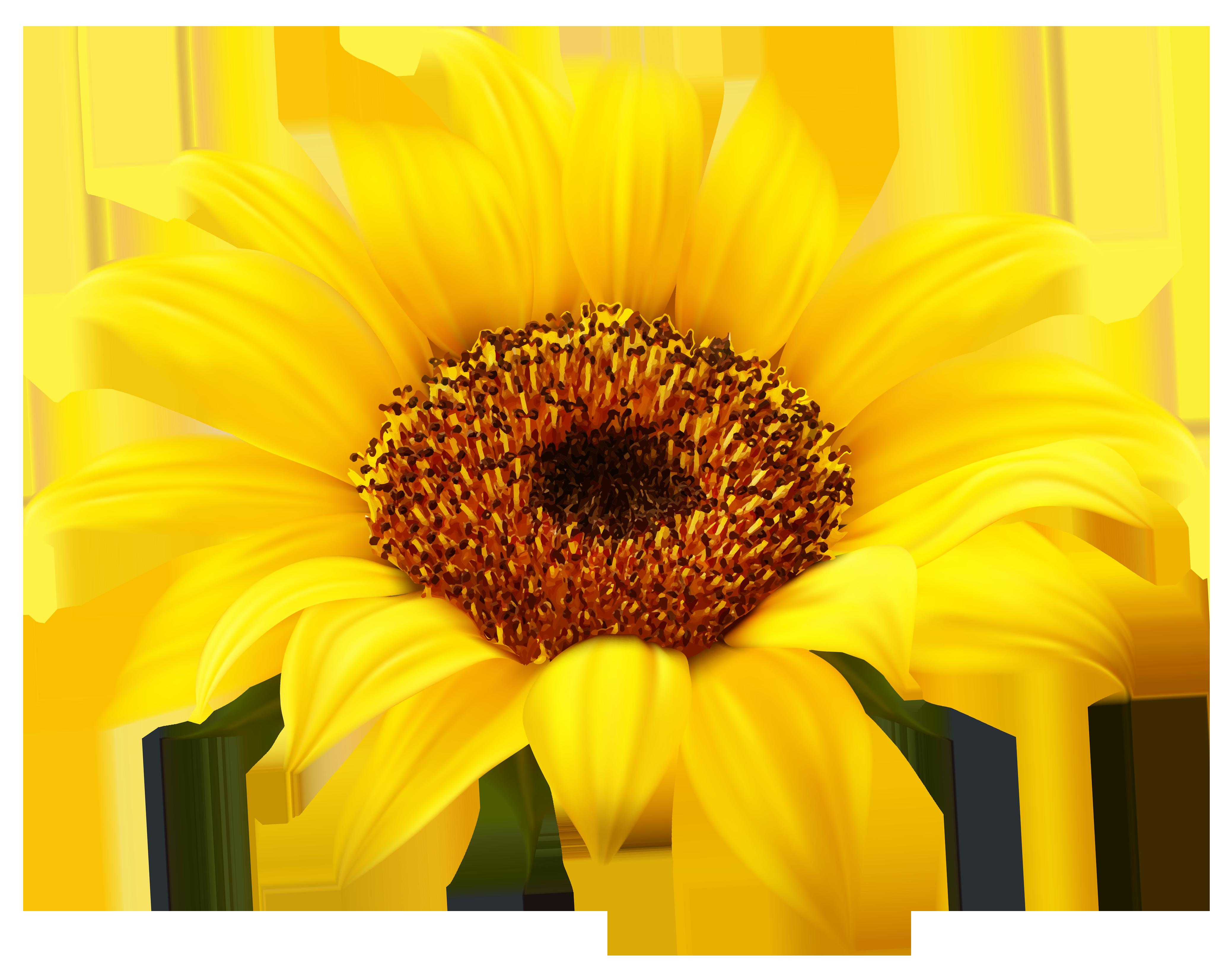 clipart fall sunflower
