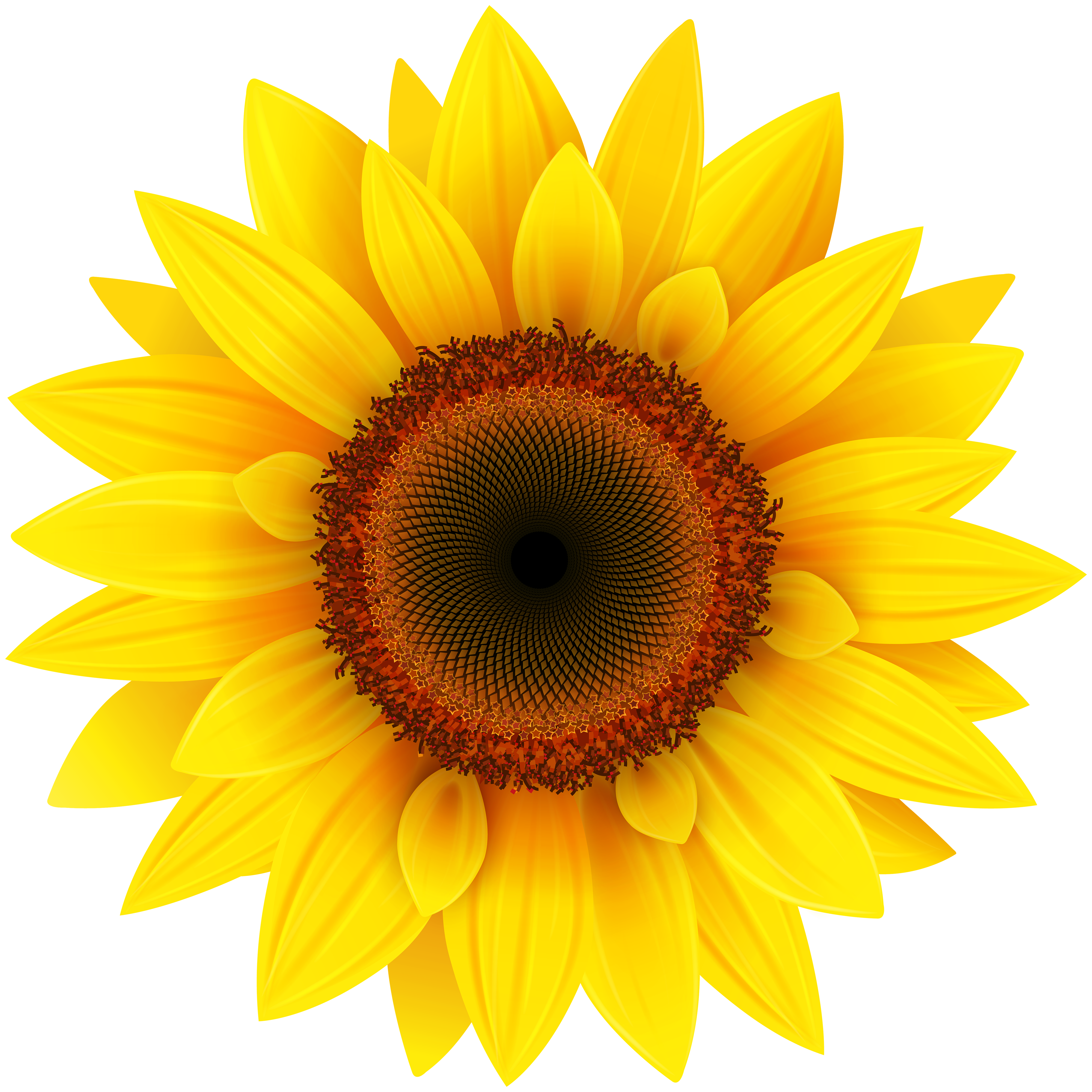 Sun flower png. Sunflower clipart picture gallery