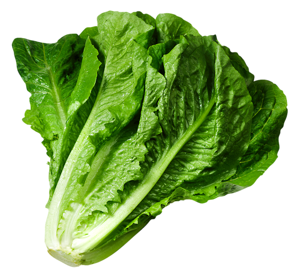 Vegetables clipart garden vegetable. Lettuce png picture gy