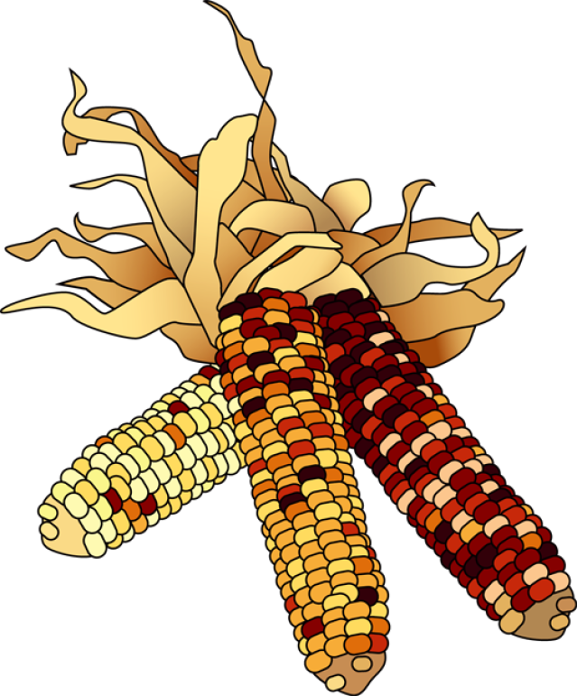 Indian . Fall clipart corn stalk