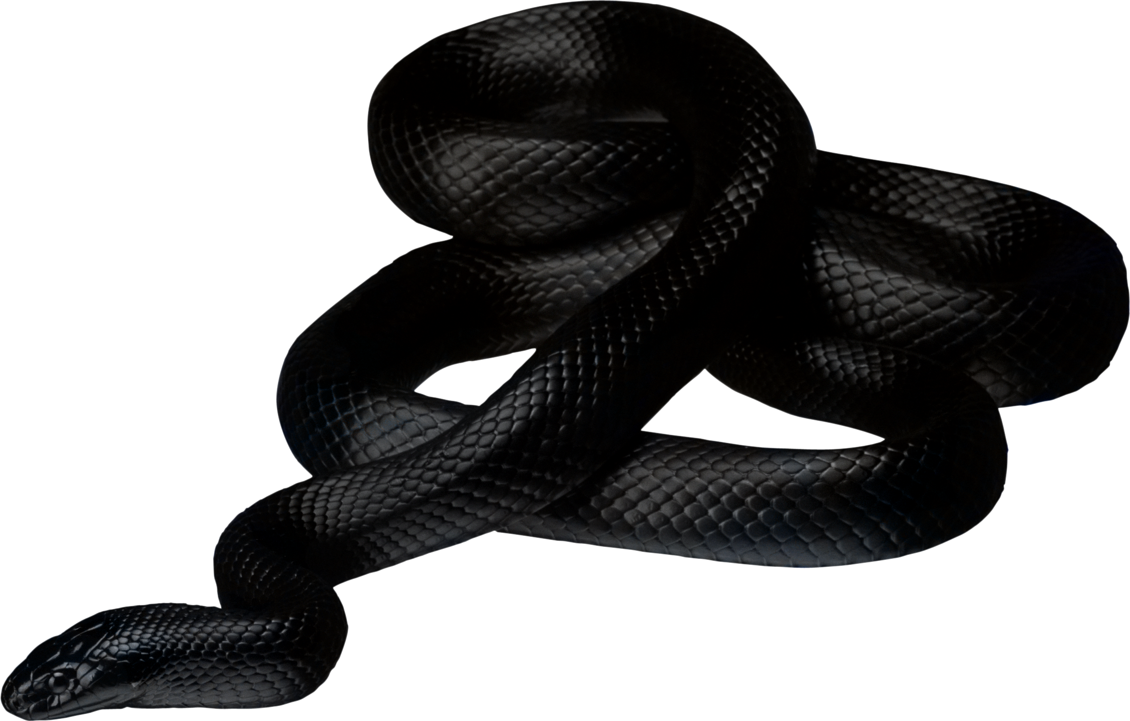 Thirty nine isolated stock. Snake clipart brown snake