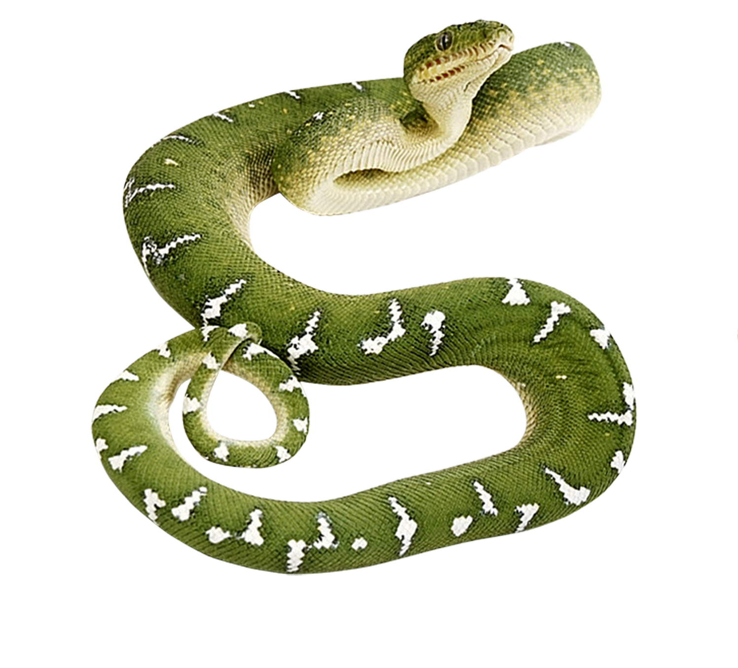 Snake clipart anaconda. Thirty five isolated stock