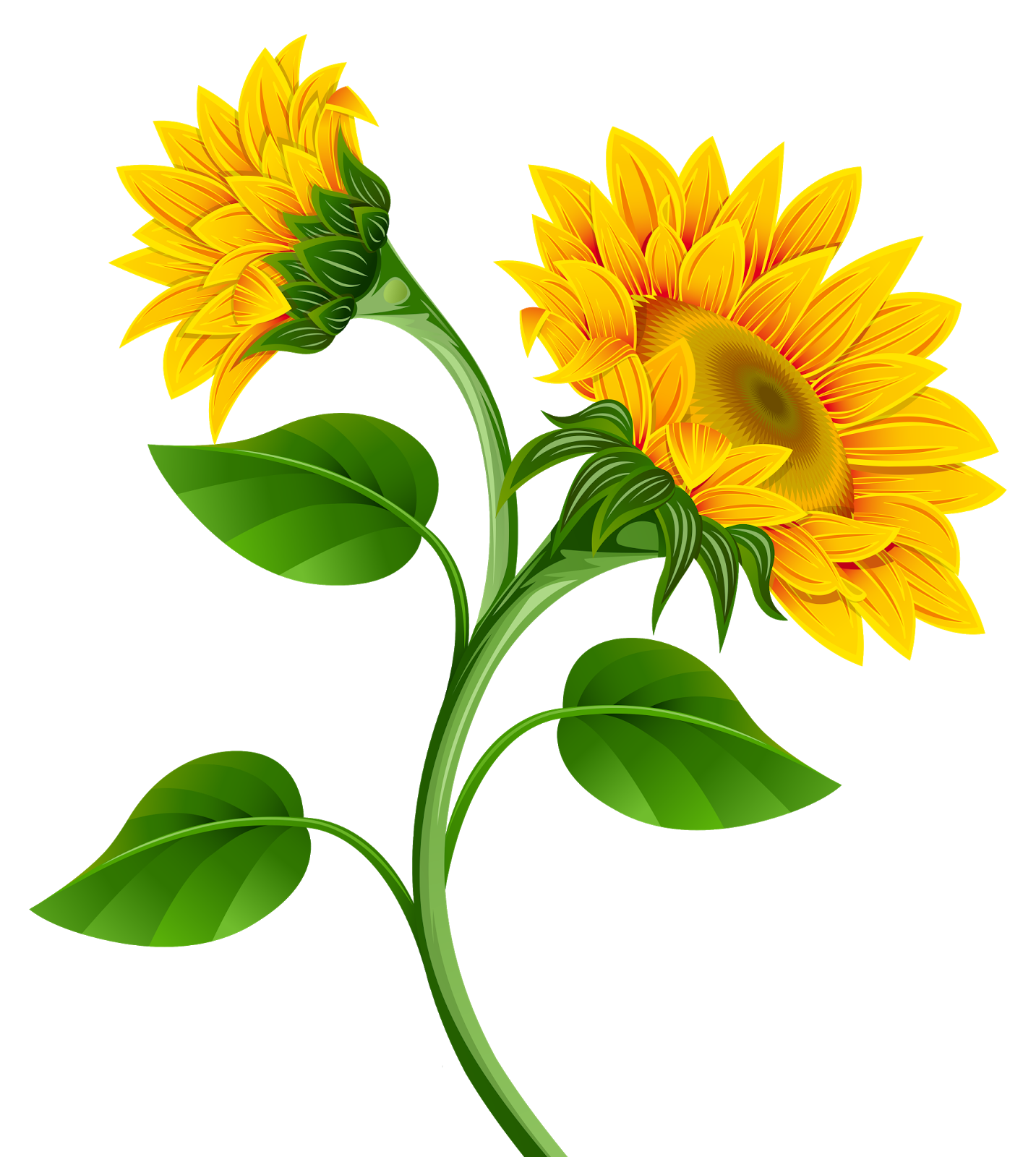 Sunflowers png image girassol. Harvest clipart sunflower
