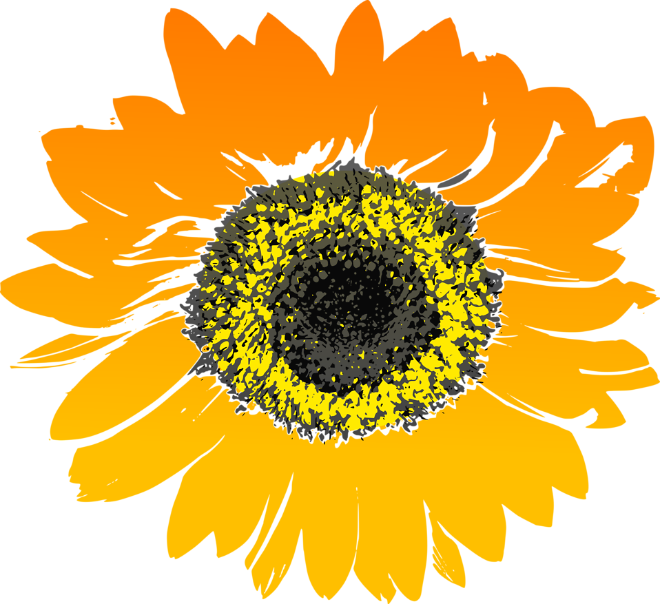 Field clipart sunflowers. Sunflower free stock photo