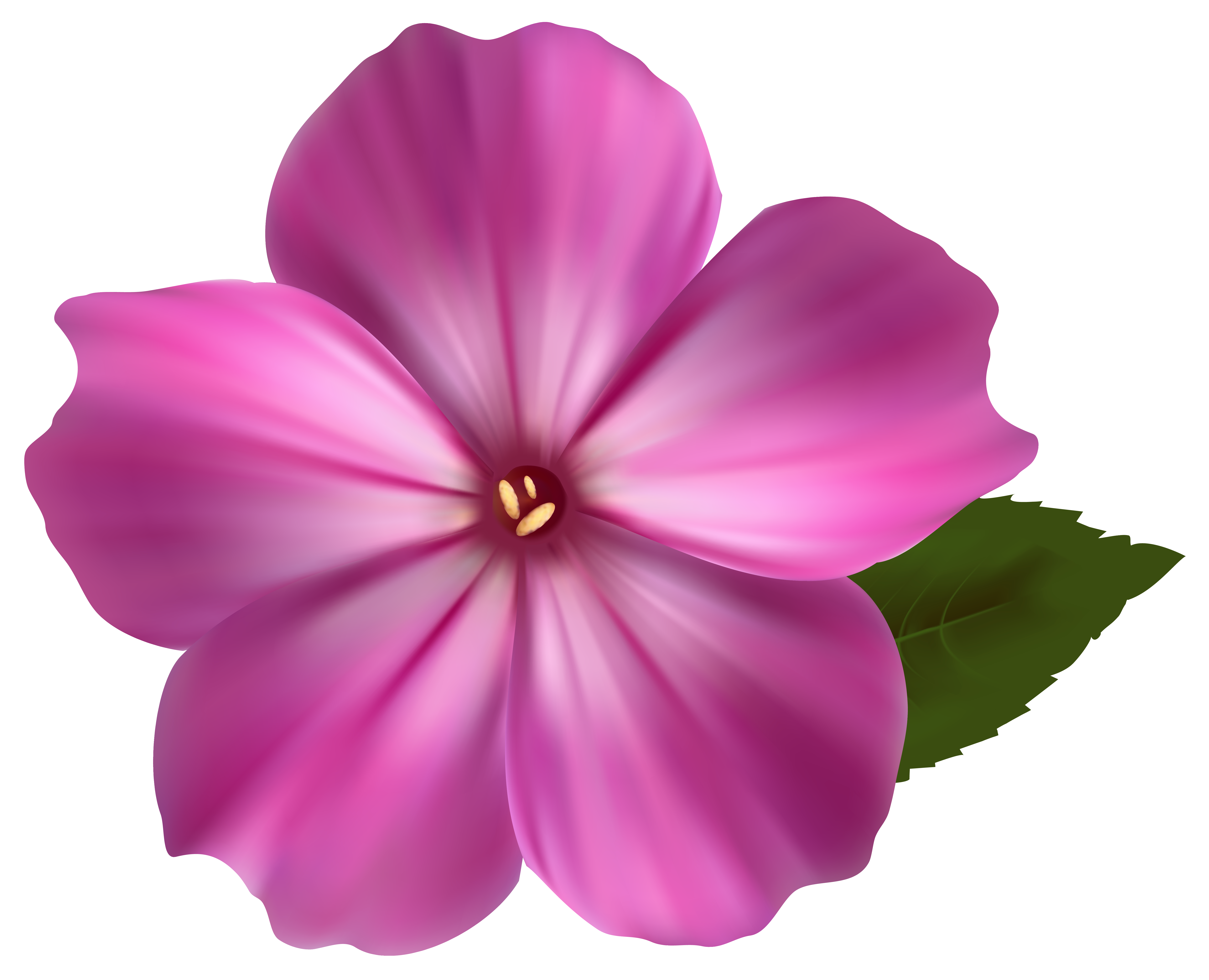 Transparent flower png. Pink clipart image gallery