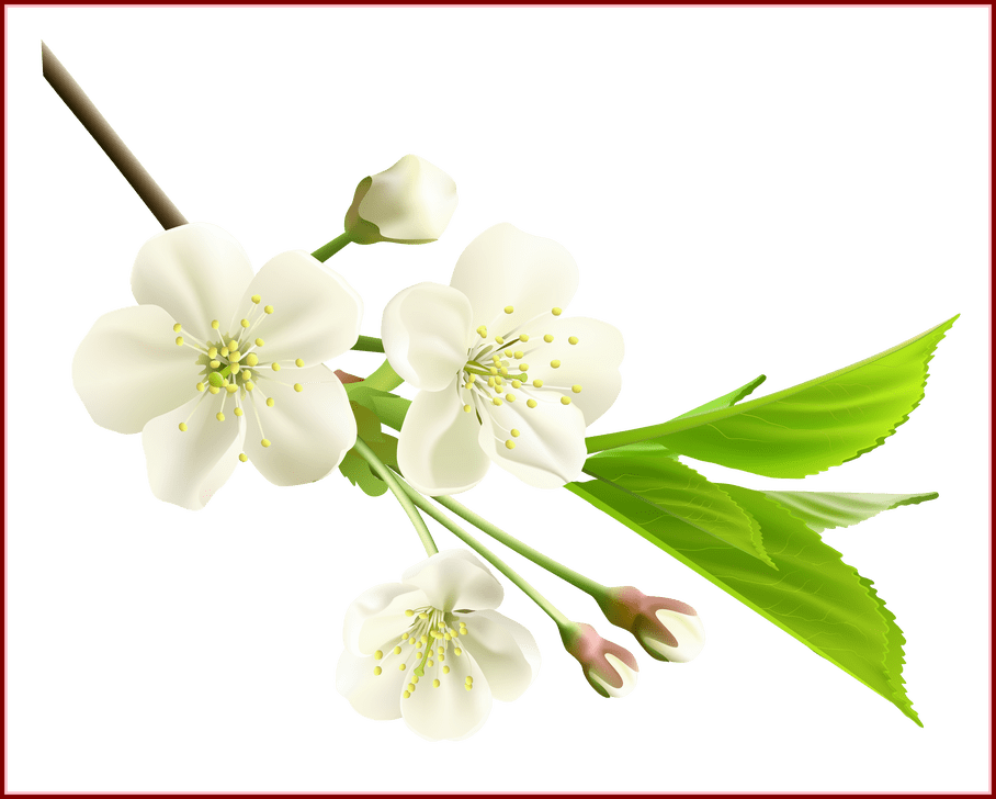 Appealing spring branch with. Clipart diamond flower