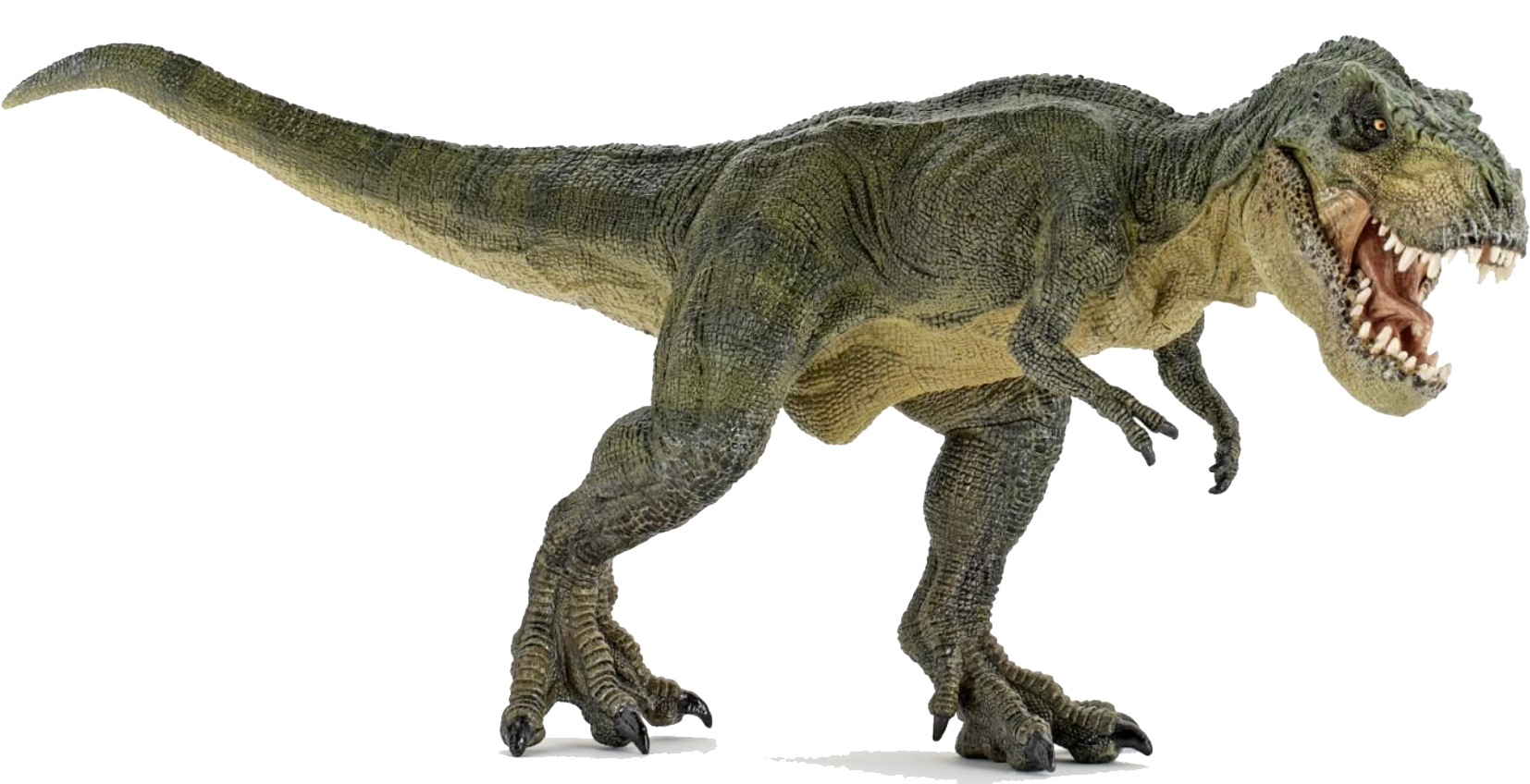 Png transparent images all. Clipart dinosaur brachiosaurus