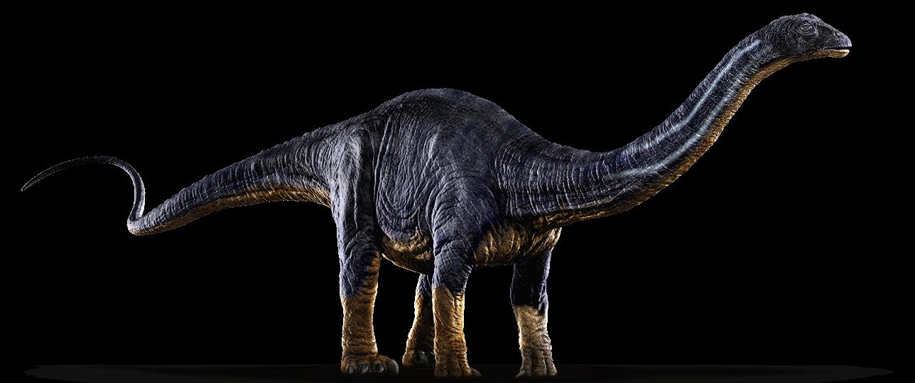 Apatosaurusajax explore on deviantart. Dinosaurs clipart apatosaurus