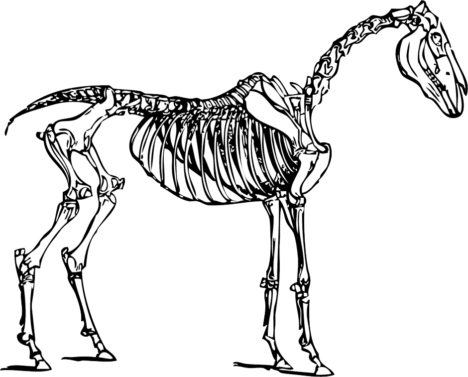 Clipart dinosaur coloured. Skeleton clip art panda