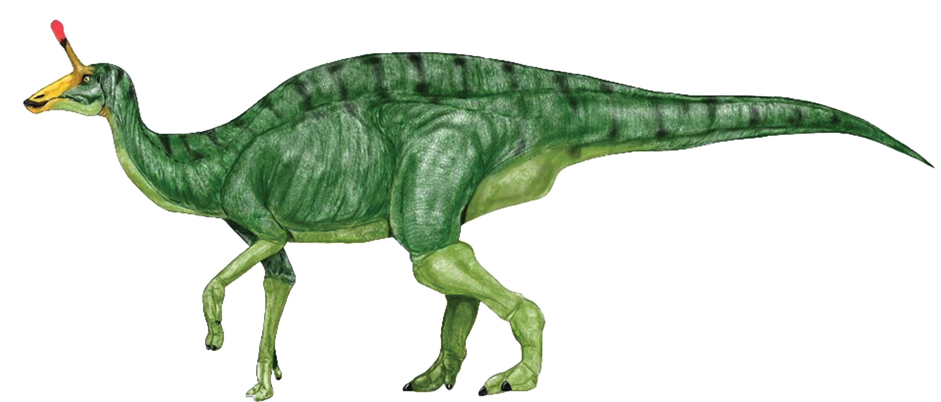 Dinosaur clipart water. Google search dinosaurs silhouettes