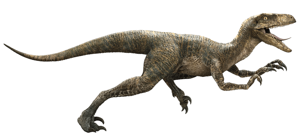 Clipart dinosaur raptor dinosaur. Velociraptor antirrhopus s f