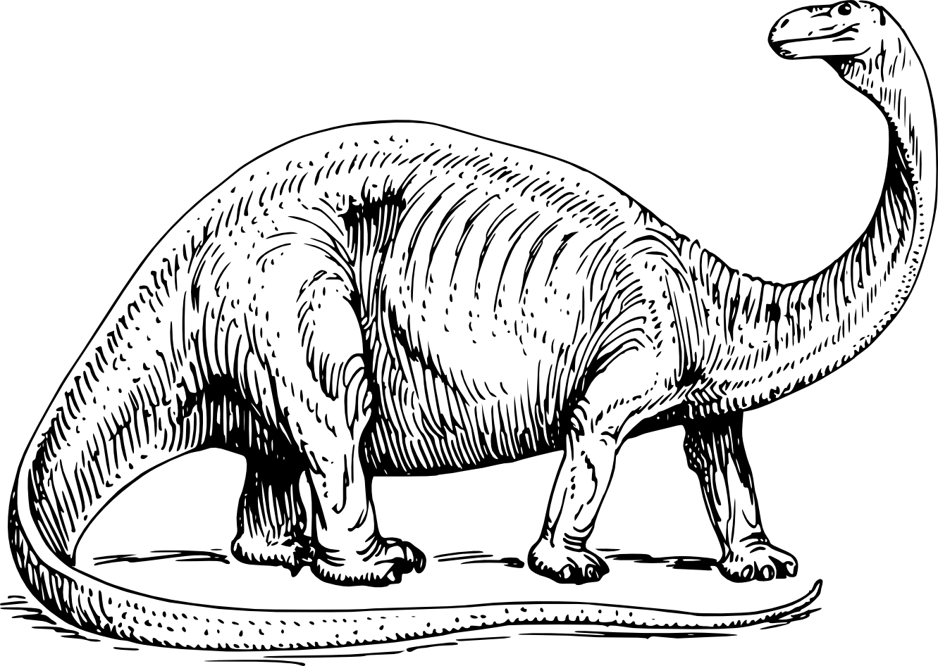 Dinosaur clipart dinosaur skeleton.  collection of black