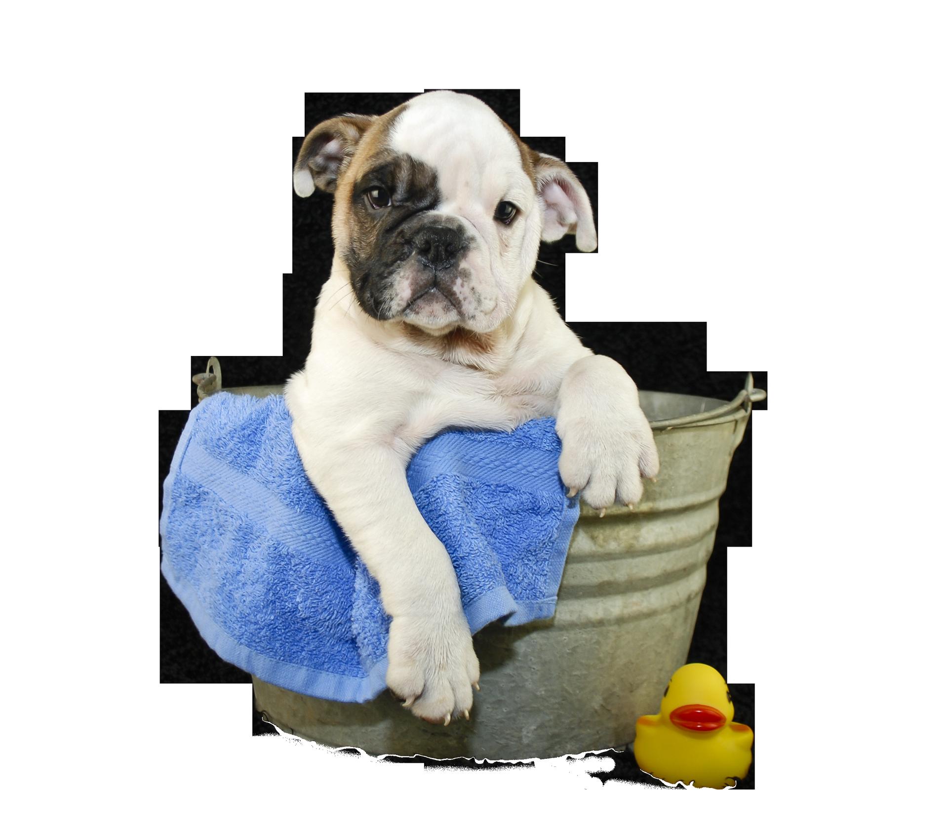 Dog png transparent images. Dogs clipart bath