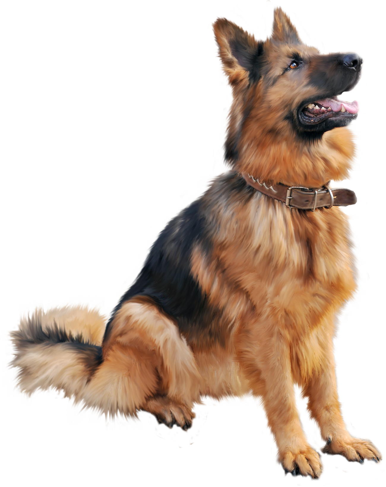 Tips and advice any. Pet clipart 3 animal