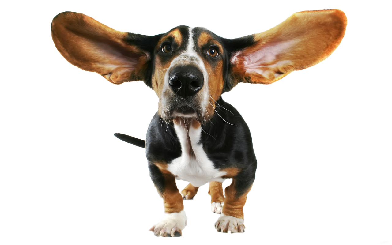 Dog transparent clipart gallery. Funny png images