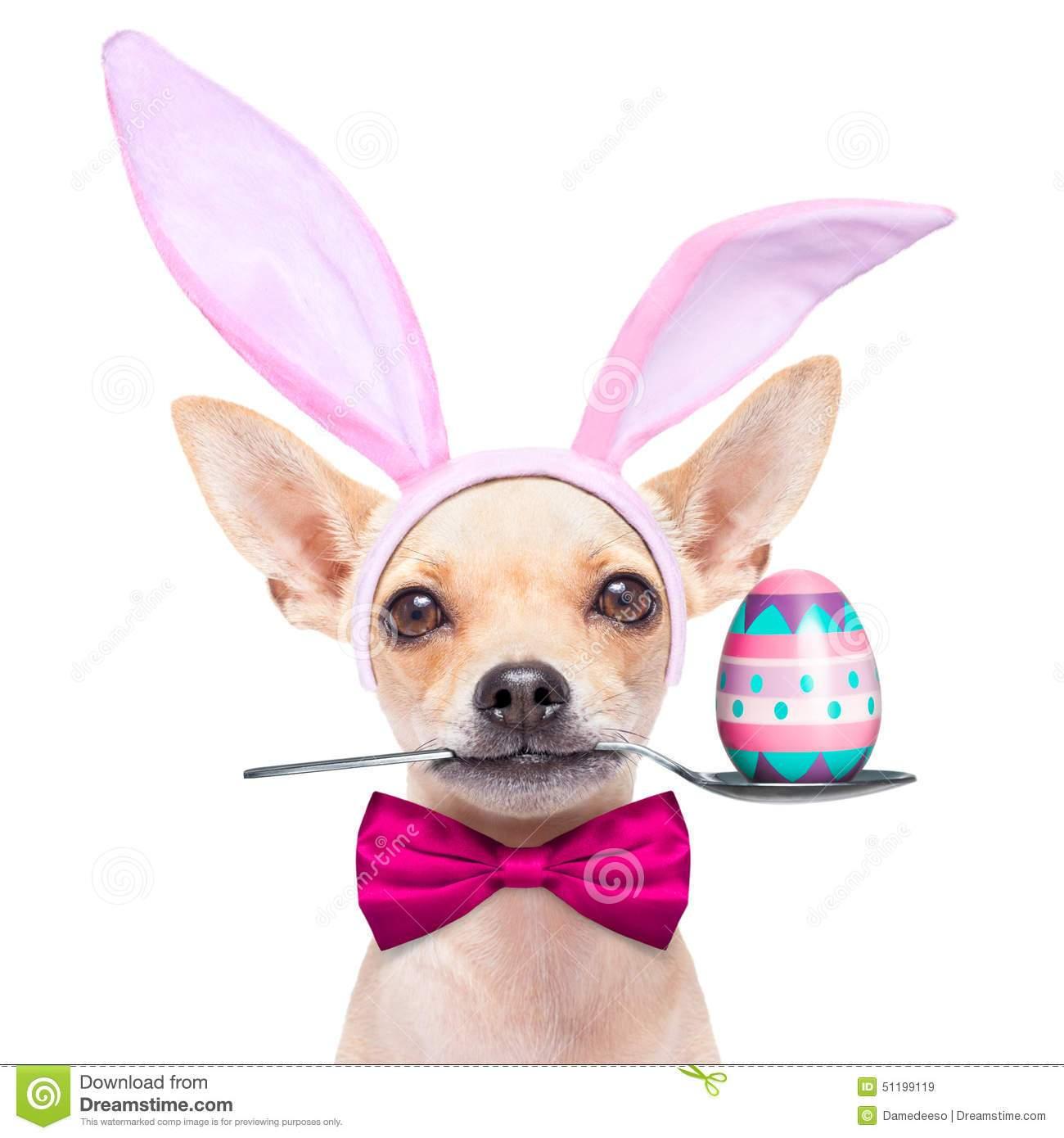 Portal . Easter clipart dog