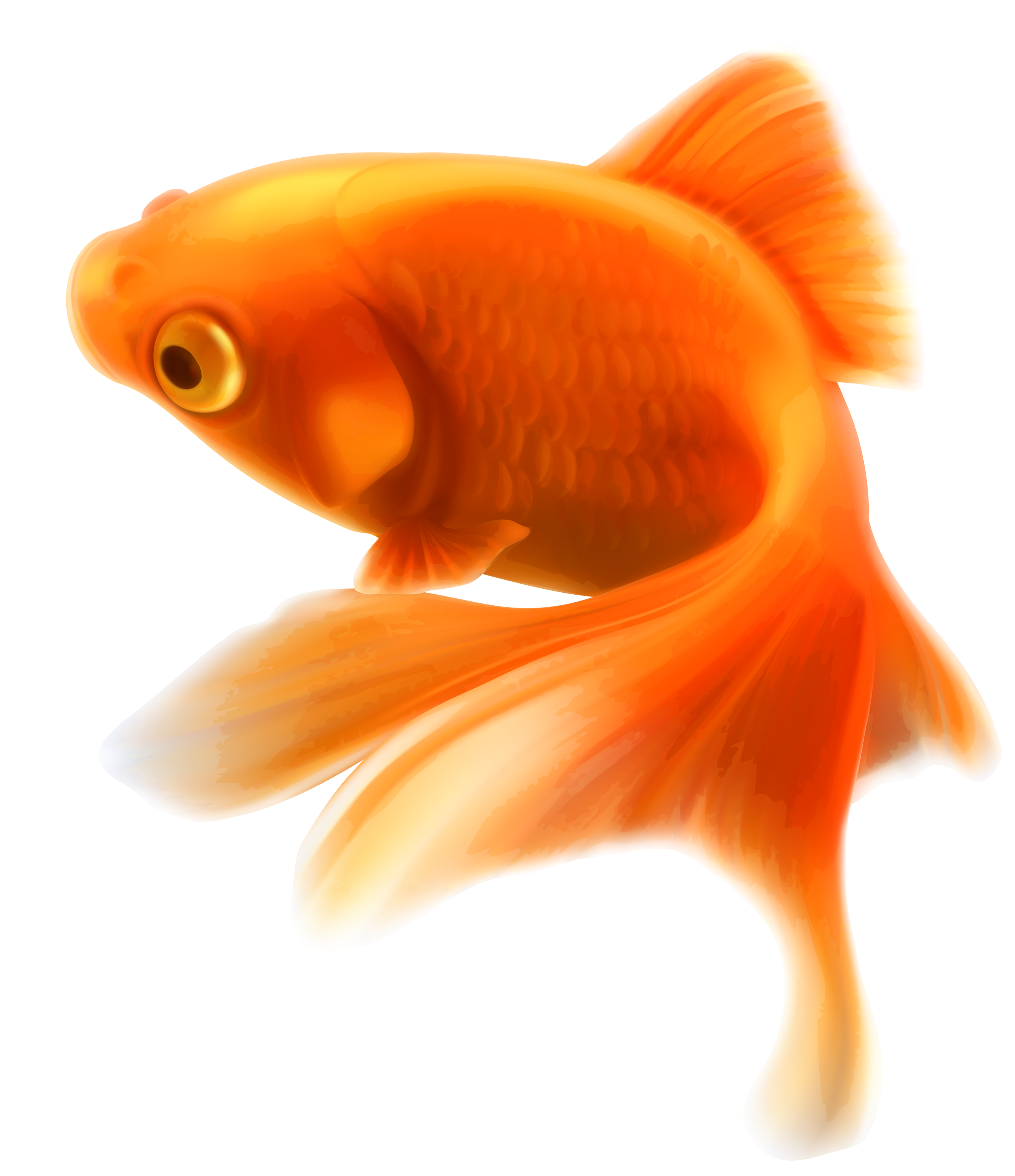 Gold fish png best. Fishing clipart dog